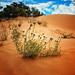 Small photo of Outback near Mildura