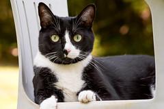 [フリー画像素材] 動物 1, 猫・ネコ ID:201208291000