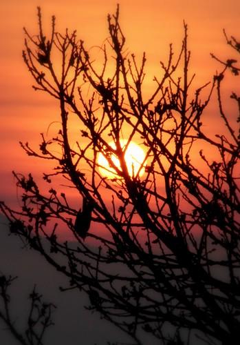 trees bird alberi sunrise alba sade uccello