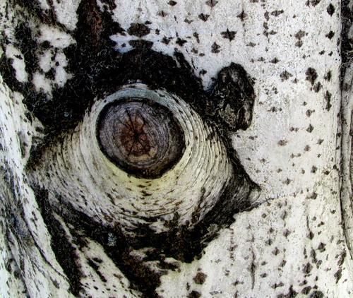 El ojo que ves no es ojo porque tú lo veas
