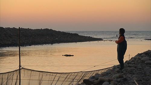 鰻魚養殖目前仍倚賴野生苗