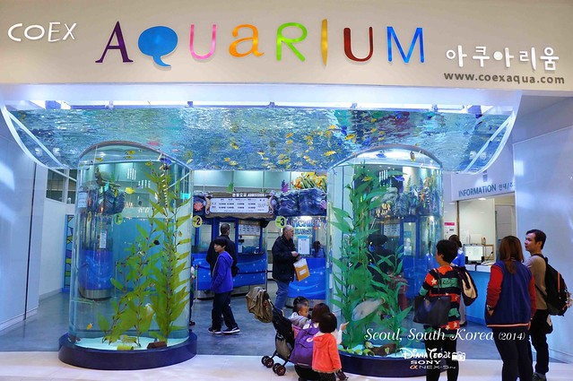 South Korea 2014 - Seoul Coex Aquarium 01