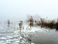 I believe there is a boat out there in the fog on the Tamar river :) #michfrost #fog