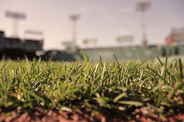 Fenway Grass Perspective