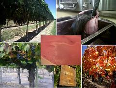 ¿Qué está pasando en viñedos y bodegas? Abril, 2012