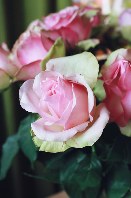 roses#2