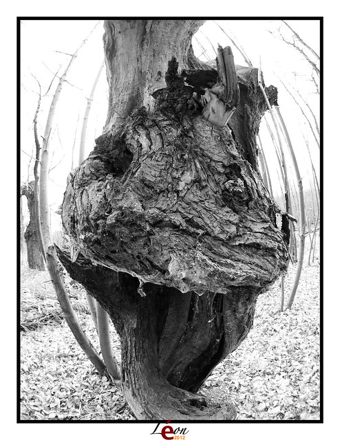 Le peuple de la forêt - Page 3 7004201997_fd79922110_z
