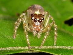 Arachnida of Ecuador