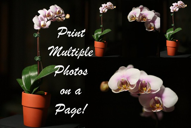 Picture Package Tutorial 1