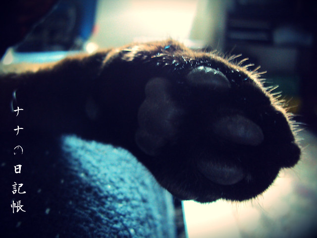 猫の足 3