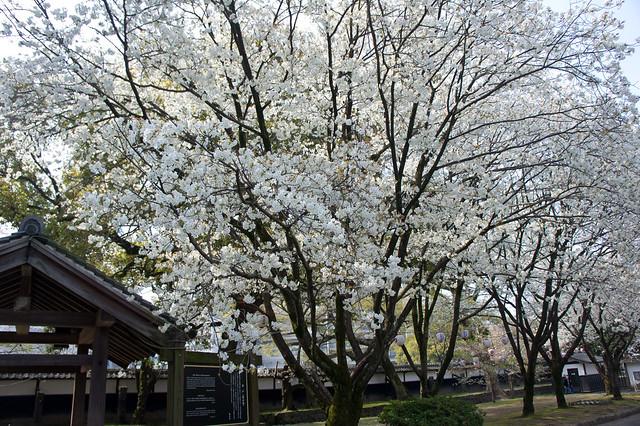 2012-kyushu-463