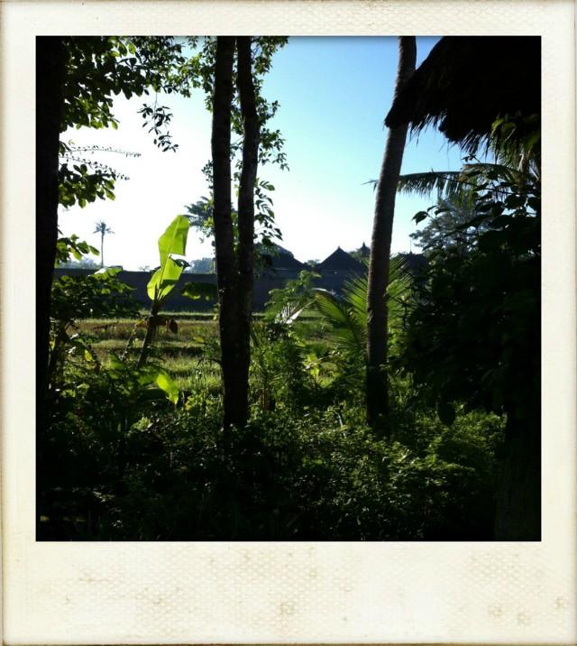 villa view fl