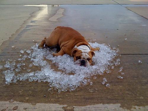 dog_days_of_summer