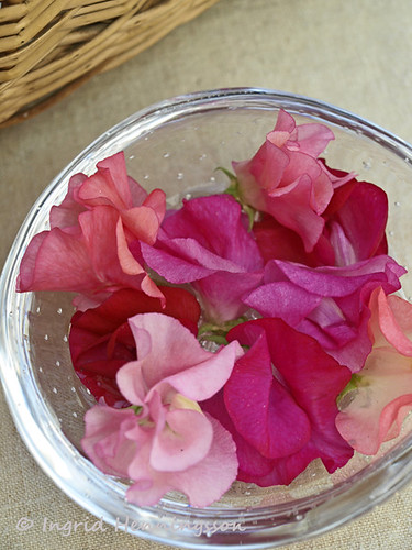 Pink Sweet Peas in a Bowl