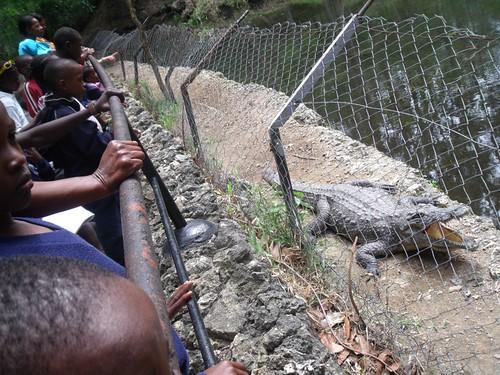 A croc !!!