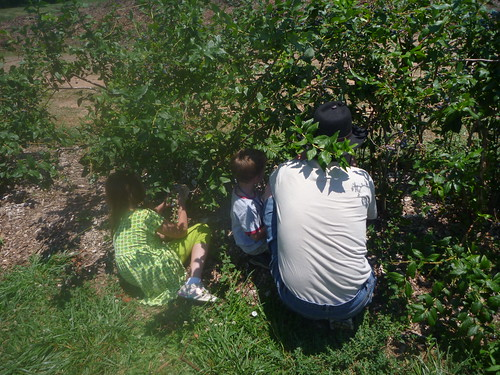 Blueberry picking with Daddy