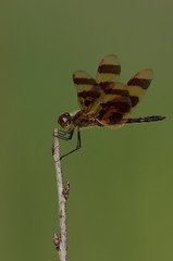 Halloween Pennant_0504.jpg by Mully410 * Images