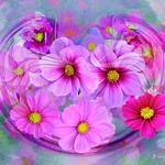 Circle of Life - Wild Flowers