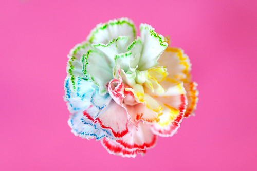 Color Me Katie: How to make rainbow flowers