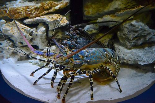 2012夏日大作戰 - 鹿児島 - かごしま水族館 (12)