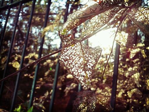 Delikli yaprak by Makcicek