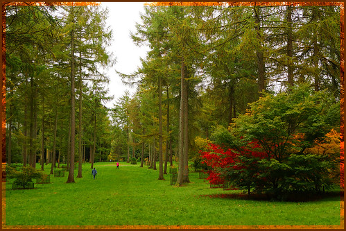 city autumn trees england colour nature forest sony westonbirt aboretum sonyslt65