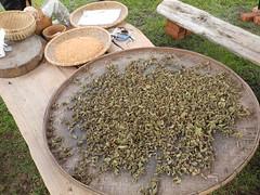 舒米茶的原料。