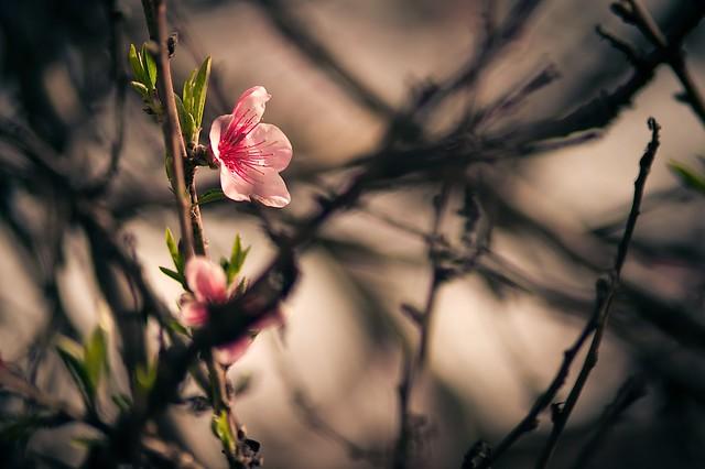 Spring Time 22