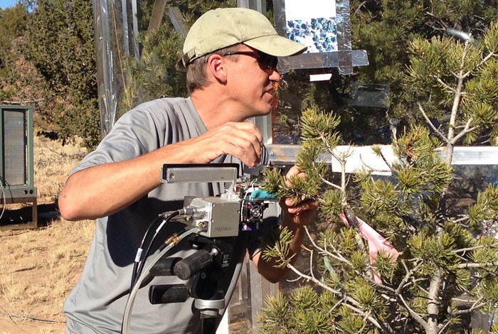 Nathan McDowell measures photosynthesis at the SUrvival MOrtality project (SUMO) drought experiments site.