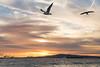 Birds in the flight path , Long Beach CA by Rachelle Mendez