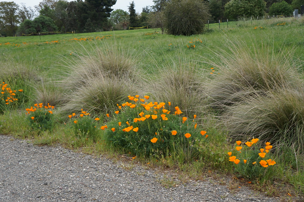 Arboretum Teaching Nursery naturalized landscape