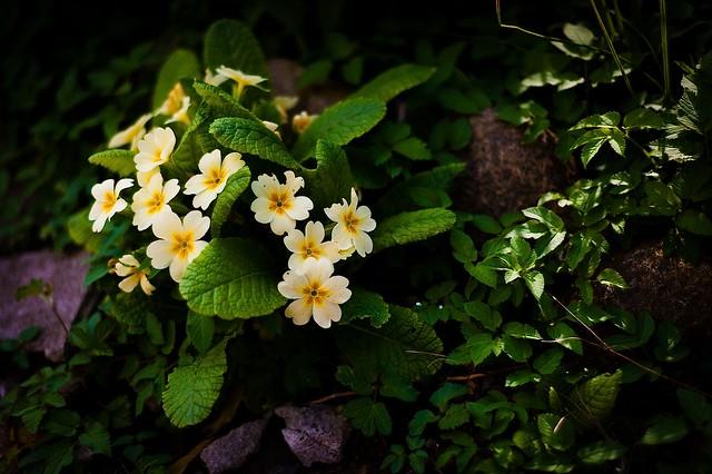Spring Time 29