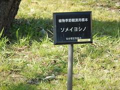 気象台の標準木