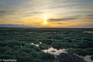 Sundown Marshland