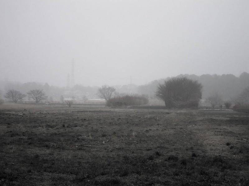 Foggy Saitama