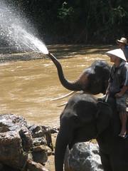 Elephant Water Spout