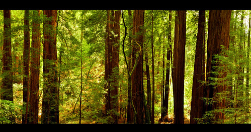 Redwood Peace