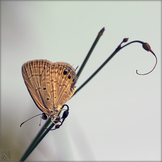 India. Arabesque and butterfly...