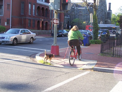 """Biking"" a dog on a bike sharing bicycle"