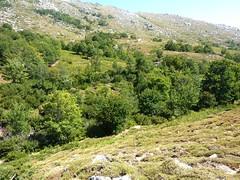 RD au-dessus du ruisseau du Cuscionu : le ruisseau