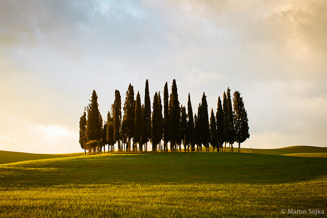 Val d'Orcia, Toscana #12 - Cypress Trees ~ Italy