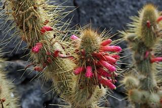 Kuva Jardín de Cactus. cactus geotagged lanzarote 2012 cactusgarden geo:lat=29080302 geo:lon=1347621