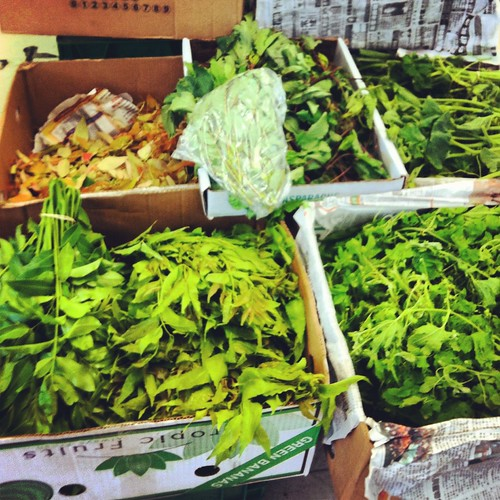 Fresh herbs at the Asian market