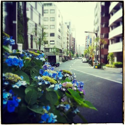 紫陽花のある風景 #inpoke