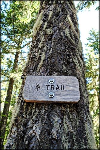 Ramona Falls Trail - Mt Hood