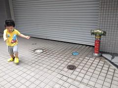 朝散歩とらちゃん (2012/7/13)