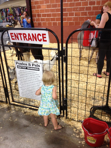Considering the petting zoo