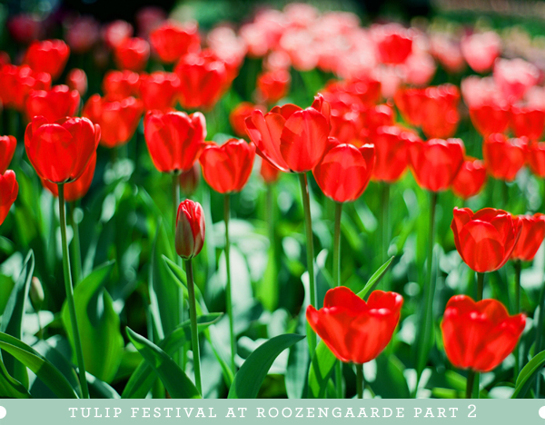 2012_0413_MtVernonTulipsPt2_01.jpg