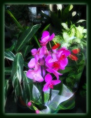 HQF ! ORCHIDS ( Everithing i do it, i do it fo you !)  Explore!