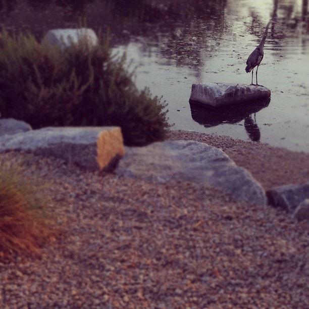 Heron Sighting